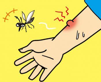 蚊アレルギーの症状と対策!治療法や薬についても解説します